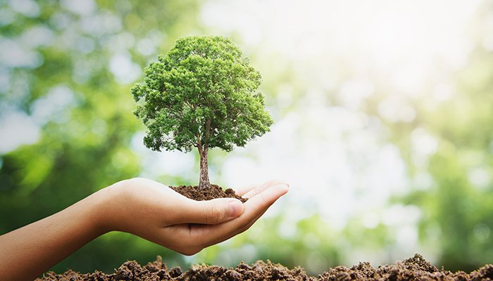 Ceea ce astăzi plantezi, mâine vei culege… Dacă plantezi iertare-vei culege împăcare